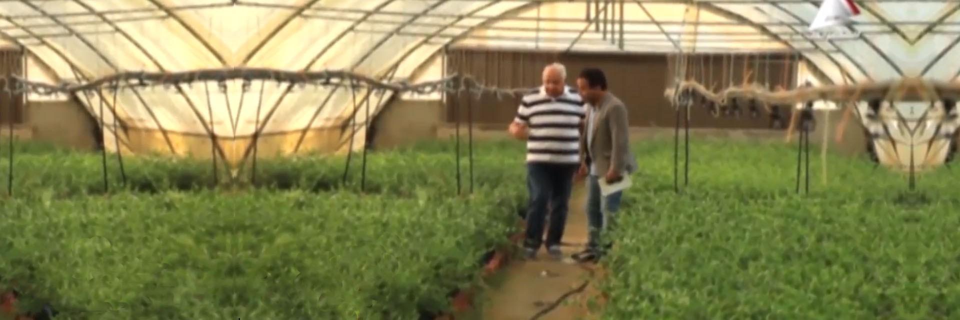 الشركة المصرية للزيوت الطبيعية ( جوجوبا)
